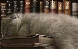 Котенок в библиотеке